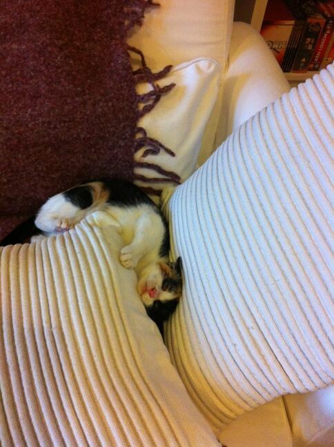 Carmen asleep in cushions