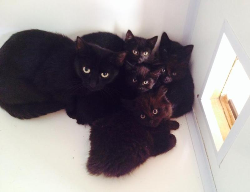 Black feral mum +kits at Evina's