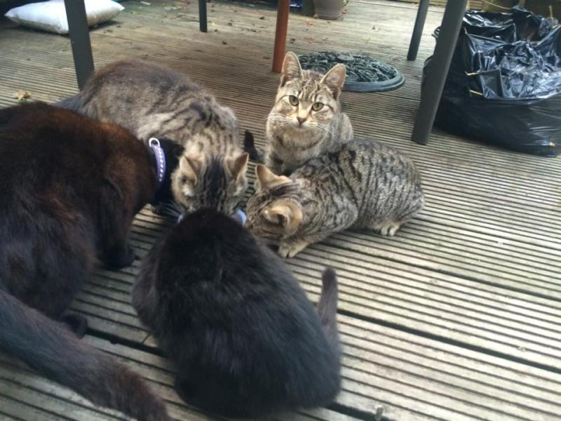Whole feral family